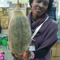 Una donna mostra il frutto del baobab