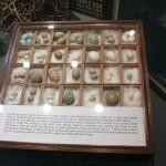 Zoologia - collezione di uova