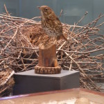 Uova e mamma uccello