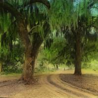 Vegetazione Louisiana