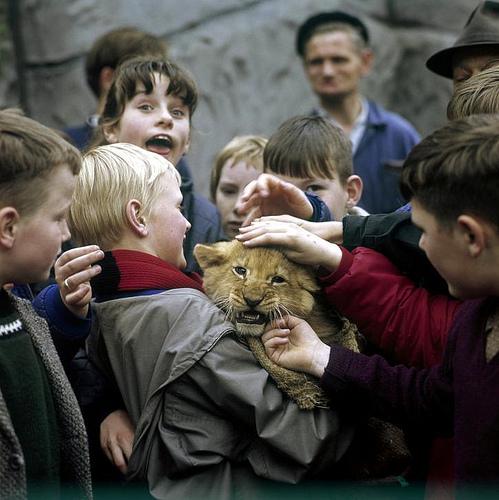 Bambini allo zoo incontrano il leone