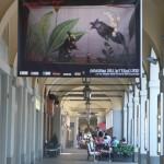 La cicala e la forica: Immagini dell'Interno