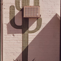 Cactus dipinto