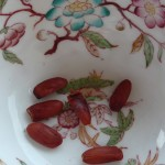 Semi magnolia