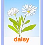 Carta daisy