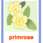 Carta primrose