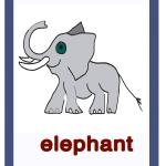 Elephant-elefante