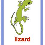 Lizard-lucertola