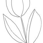 Disegno di un tulipano