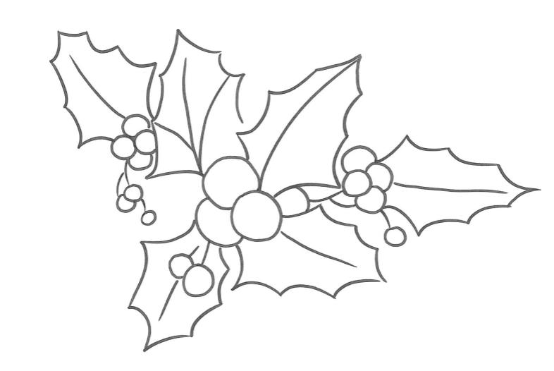 Agrifoglio disegno