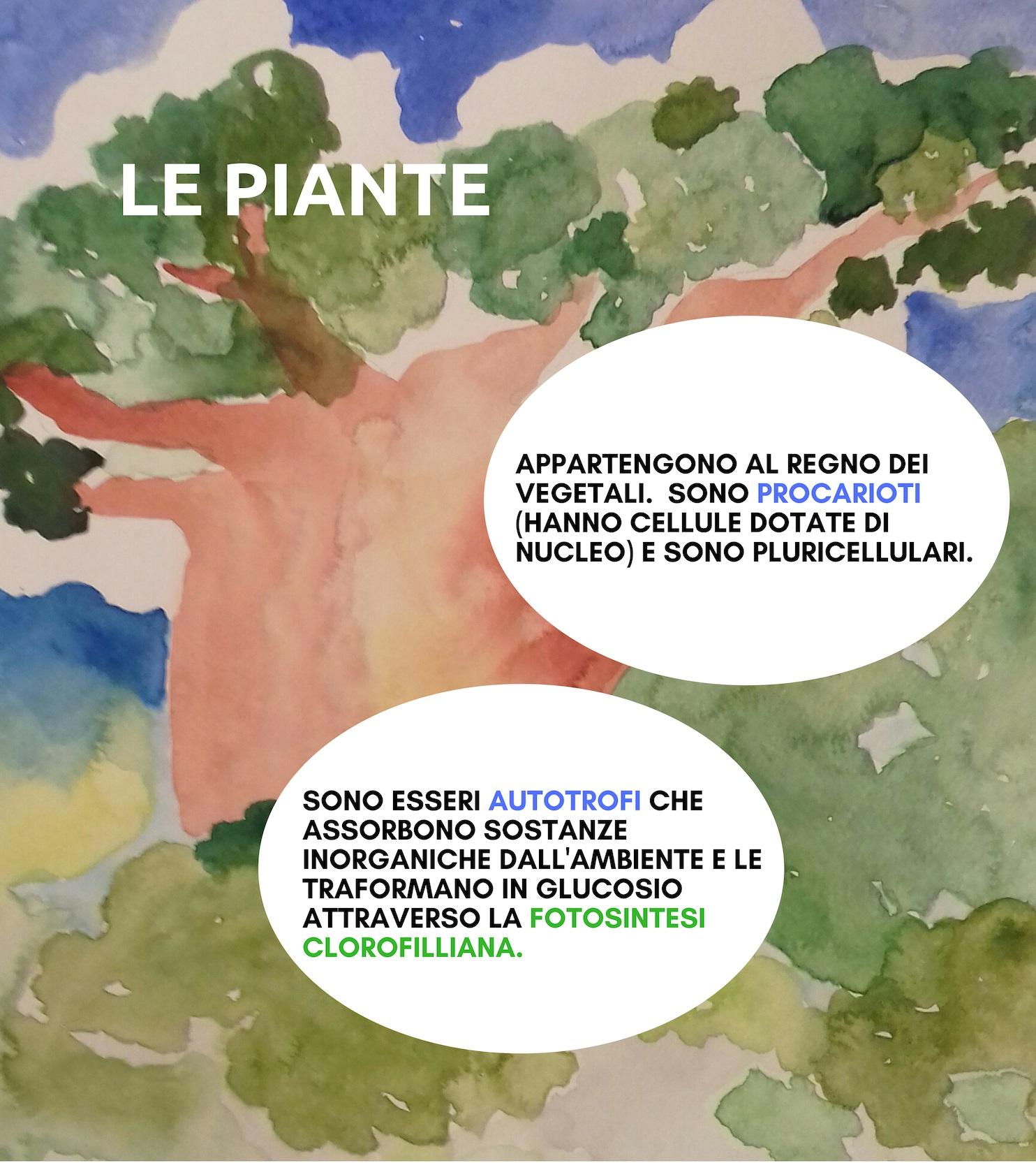 Mappa Concettuale Della Fotosintesi Clorofilliana E Delle